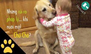 Những rủi ro pháp lý khi nuôi một chú chó