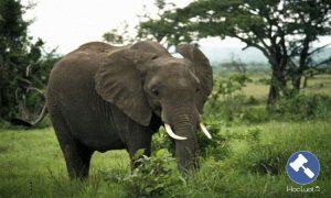 Thực vật rừng, động vật rừng nguy cấp, quý, hiếm